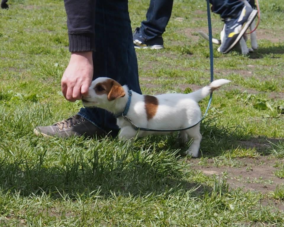 psie przedszkole, szczeniaczkowo, Baritus - szkolenie psów