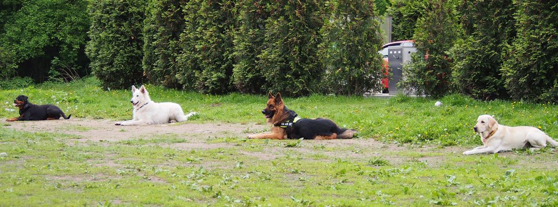 baritus szkolenia psów